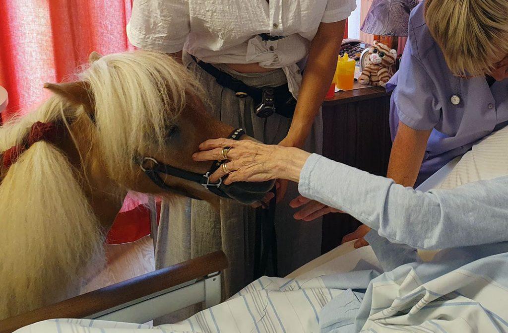 Einzelbetreuung im Seniorenheim - Besuch vom Pony
